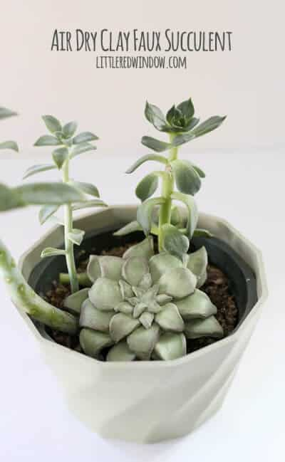 clay succulent